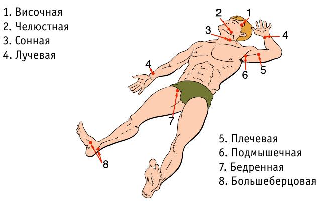 Точки прижатия артерий